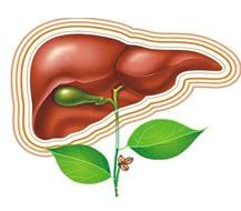 Противопоказания к лечению гепатита с