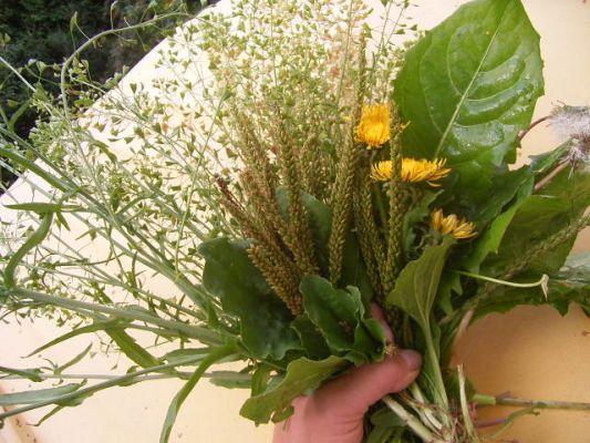 Гастрит , симптомы, лечение травами, сборы трав.