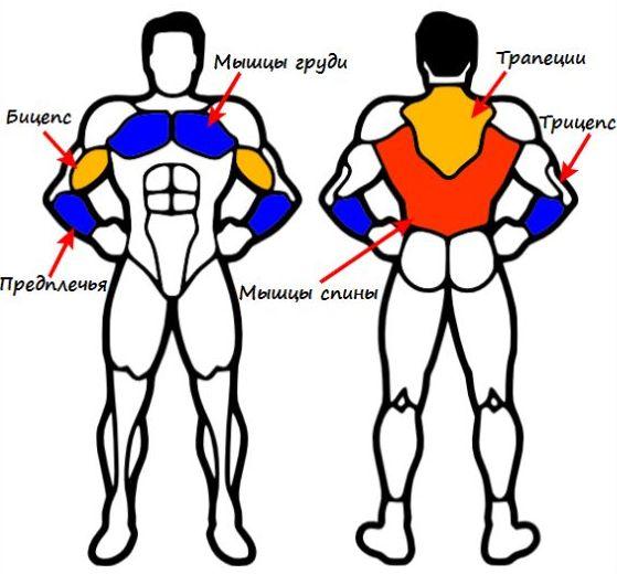 определенные группы мышц.