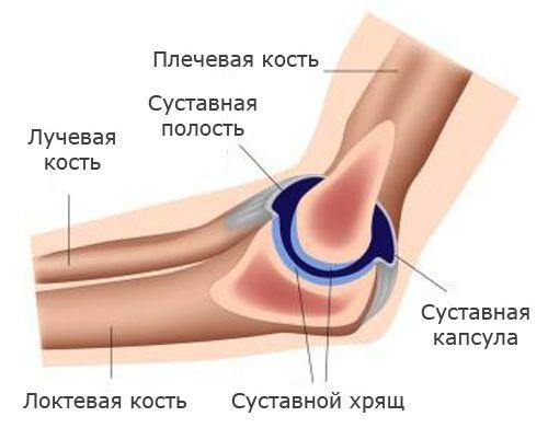 Боль в локтевых суставах после бокса мышцы локтевого сустава