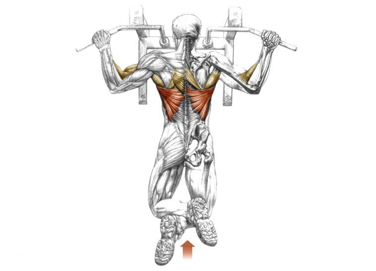 Как накачать широчайшие мышцы спины в домашних условиях