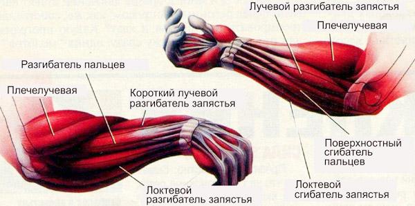 Как качать кисть руки в домашних условиях