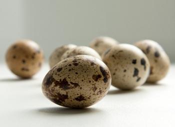 польза перепелиных яиц при бронхиальной астме
