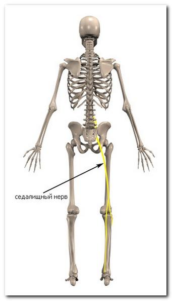 Левосторонний сколиоз грудного отдела позвоночника упражнения