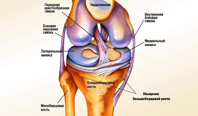 Препараты для лечения коксартроза 3 степени тазобедренного сустава без операции