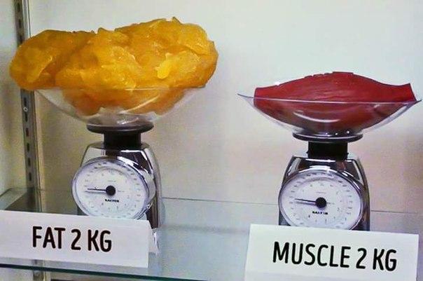 Жир легче мышечной массы thumbnail