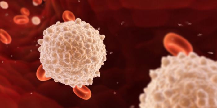 Повышение лейкоциты
