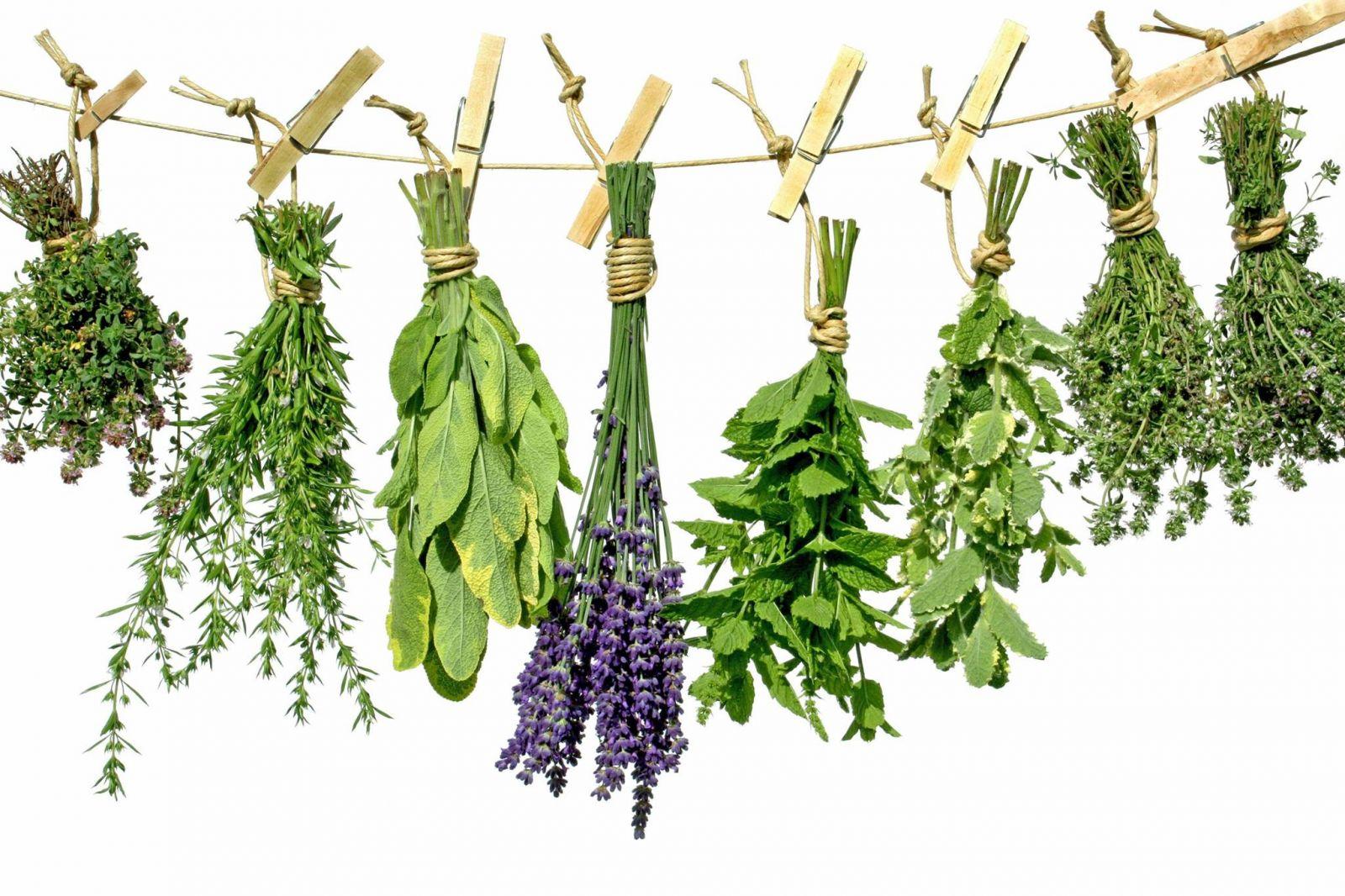 Лекарства травы при ангине thumbnail