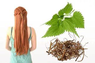 Отвар и настой крапивы для волос. Рецепты