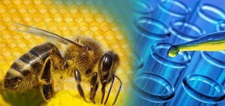 Изображение - Мазь для суставов на основе пчелиного %D0%BF%D1%871