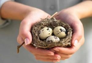 Перепелиные яйца для роста волос
