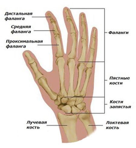 Воспаление сустава фаланги пальца руки