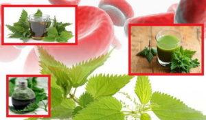 Настойка крапивы на водке - применение, как принимать. Как сделать настойку крапивы на спирту