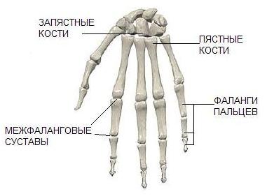 Изображение - Гибкость суставов рук perelom-kisti